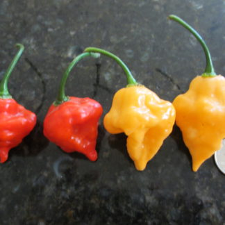 Naga Morich x Scotch Bonnet